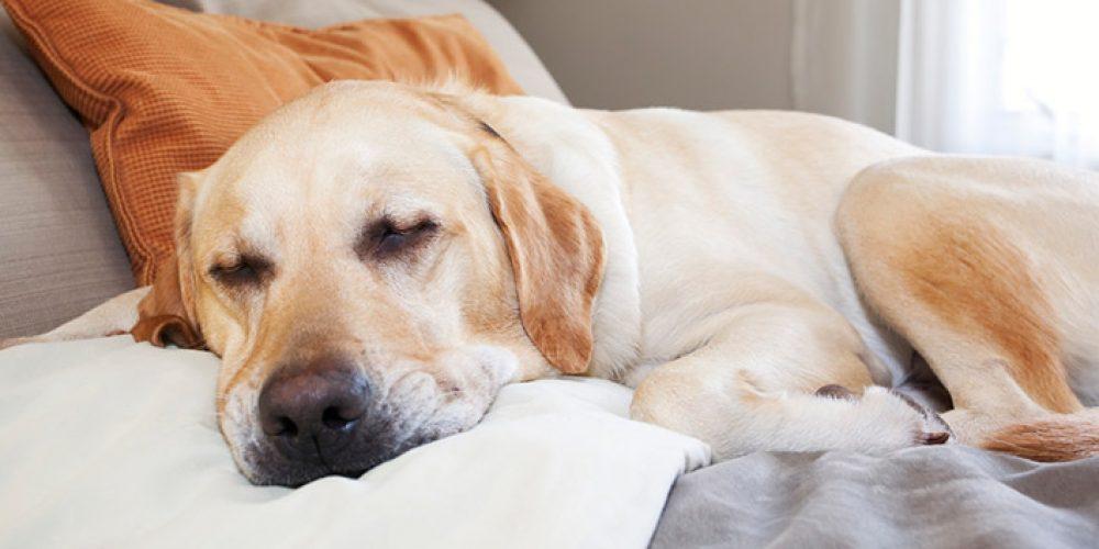 hotel-4-zampe-che-accettano-cani-4151201803.jpg
